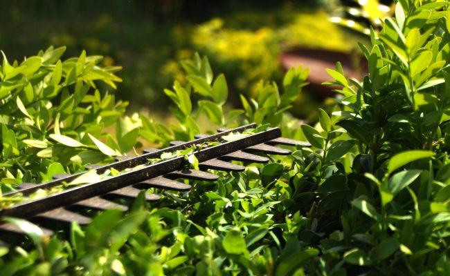 outil de jardin